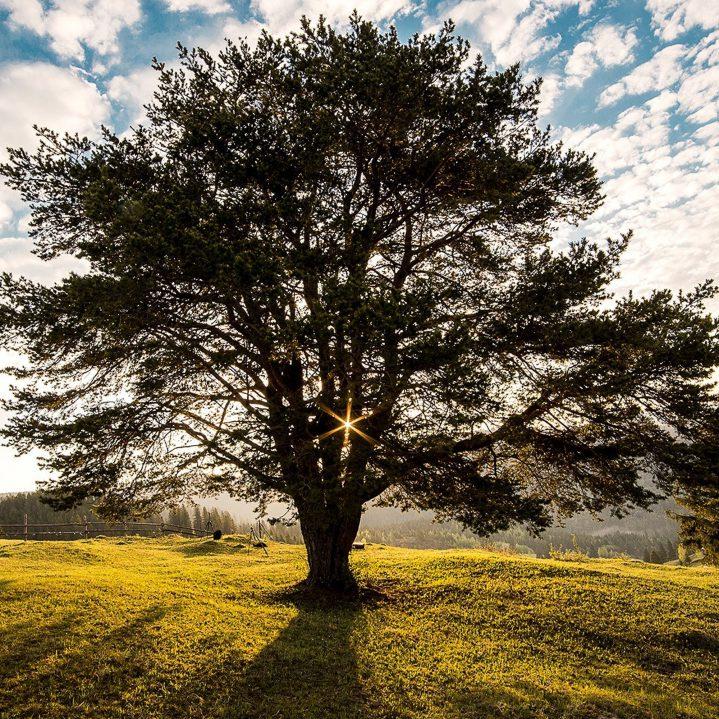 De-legende-van-de-drie-bomen
